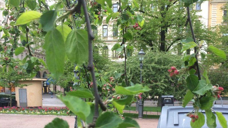 ヘルシンキの緑道